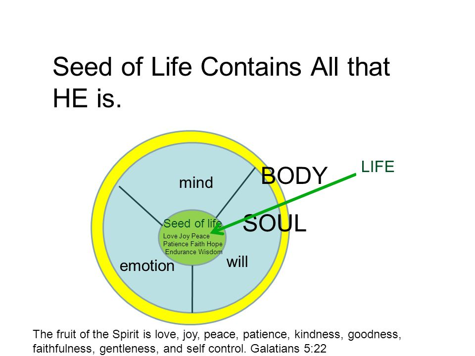 b mind emotion will Seed of life Seed of Life Contains All that HE is.