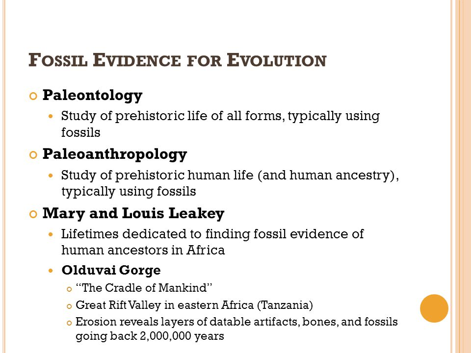 F OSSIL E VIDENCE FOR E VOLUTION Paleontology Study of prehistoric life of all forms, typically using fossils Paleoanthropology Study of prehistoric h