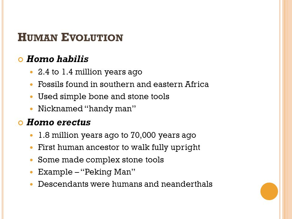 H UMAN E VOLUTION Homo habilis 2.4 to 1.4 million years ago Fossils found in southern and eastern Africa Used simple bone and stone tools Nicknamed ha