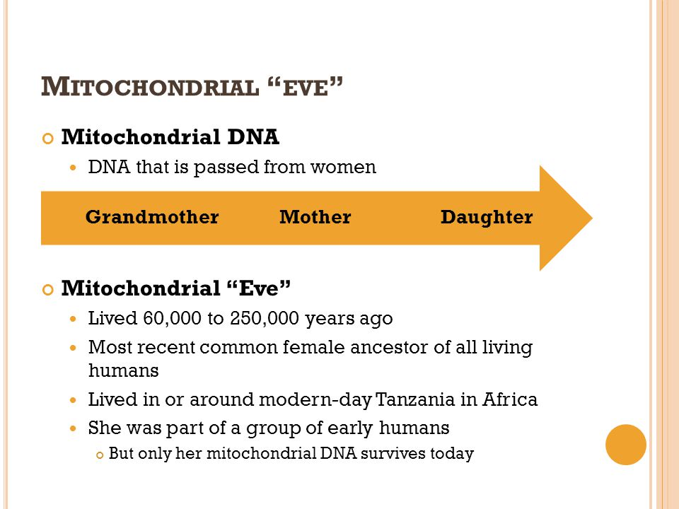 M ITOCHONDRIAL EVE Mitochondrial DNA DNA that is passed from women Mitochondrial Eve Lived 60,000 to 250,000 years ago Most recent common female ances