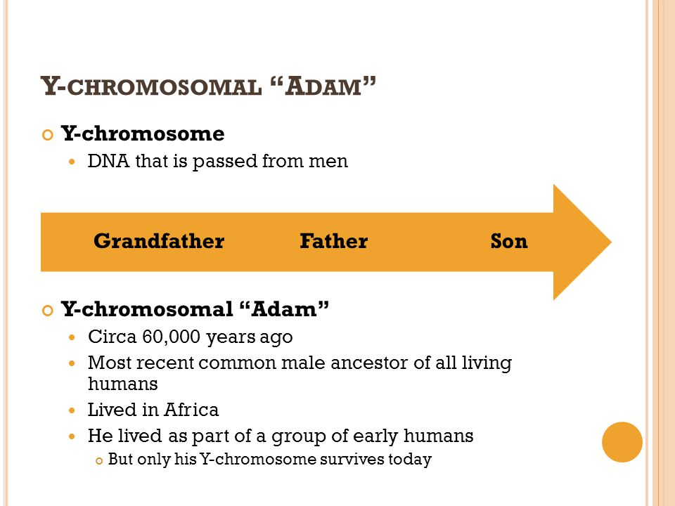 Y- CHROMOSOMAL A DAM Y-chromosome DNA that is passed from men Y-chromosomal Adam Circa 60,000 years ago Most recent common male ancestor of all living