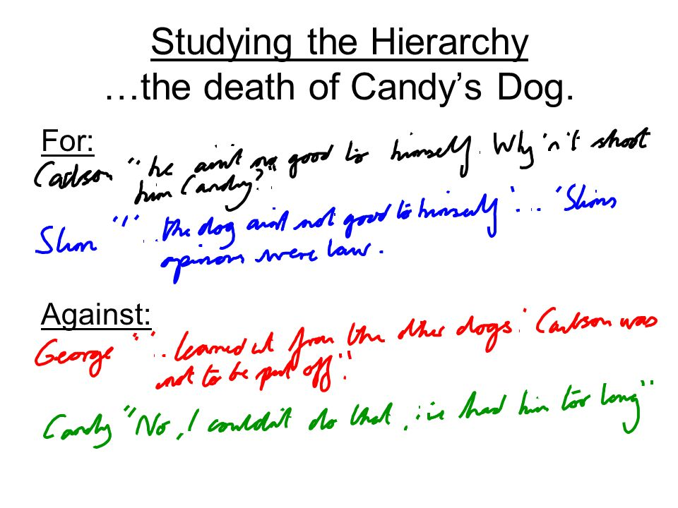 Studying the Hierarchy …the death of Candys Dog. For: Against: