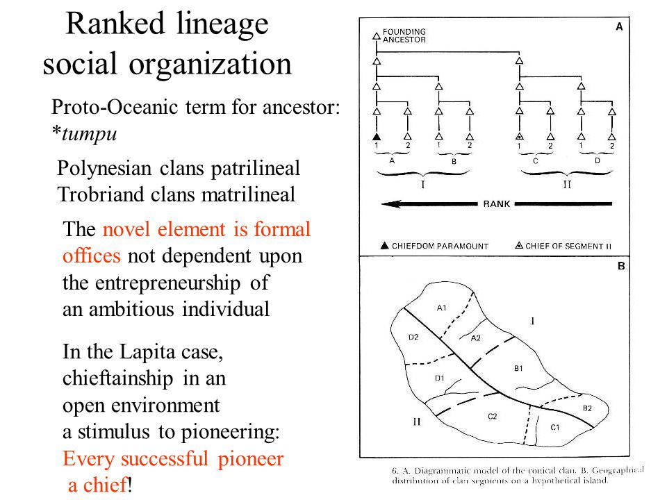 Ranked lineage social organization Polynesian clans patrilineal Trobriand clans matrilineal The novel element is formal offices not dependent upon the