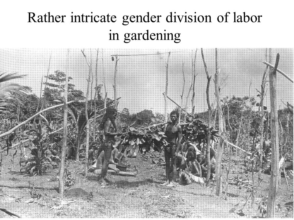 Rather intricate gender division of labor in gardening