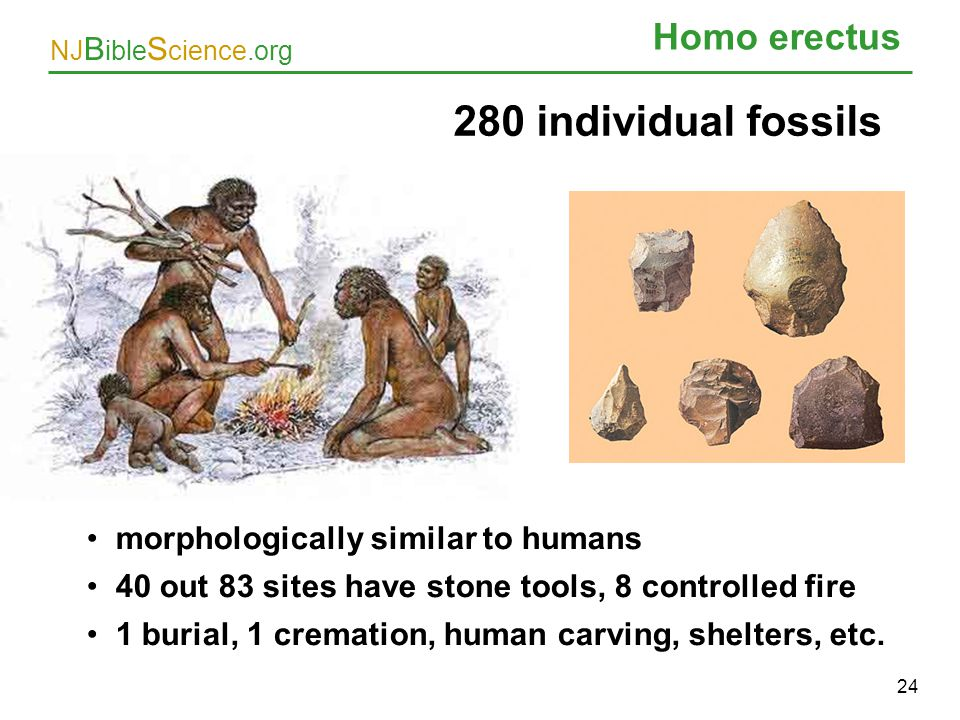 NJ B ible S cience.org Homo erectus 24 280 individual fossils morphologically similar to humans 40 out 83 sites have stone tools, 8 controlled fire 1