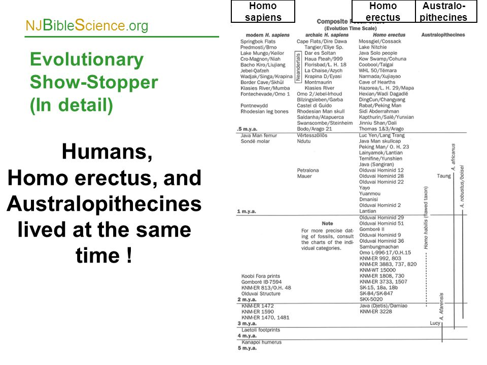 NJ B ible S cience.org Evolutionary Show-Stopper (In detail) 34 Humans, Homo erectus, and Australopithecines lived at the same time ! Homo sapiens Aus