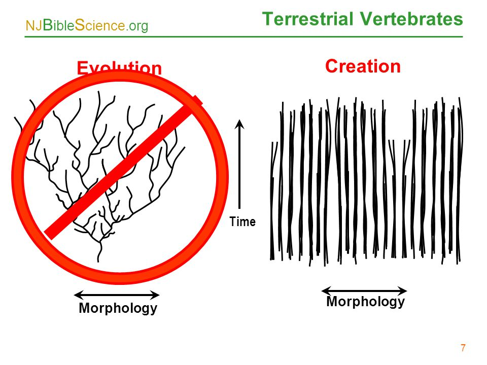 NJ B ible S cience.org 7 Terrestrial Vertebrates Evolution Creation Morphology Time