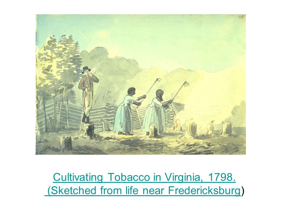 Cultivating Tobacco in Virginia, 1798.