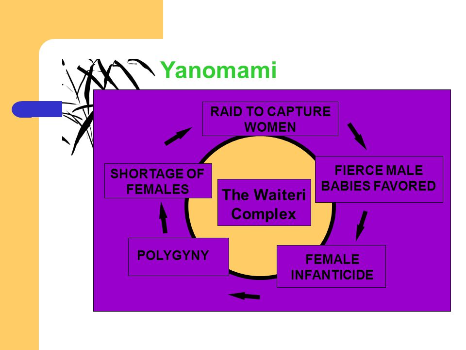 SHORTAGE OF FEMALES RAID TO CAPTURE WOMEN FIERCE MALE BABIES FAVORED FEMALE INFANTICIDE POLYGYNY The Waiteri Complex Yanomami
