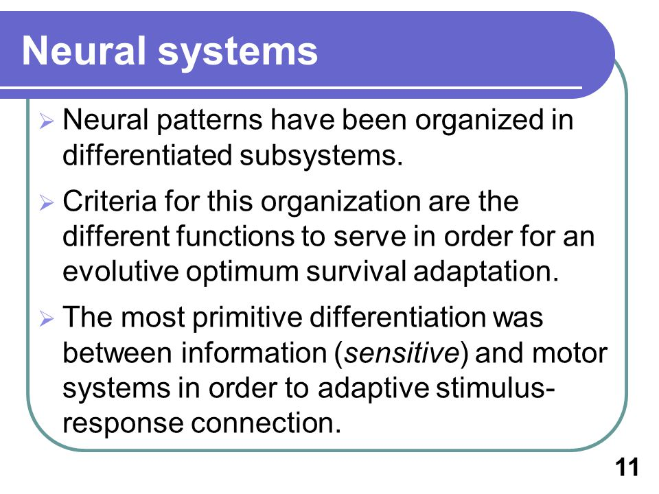 Neural systems Neural patterns have been organized in differentiated subsystems.