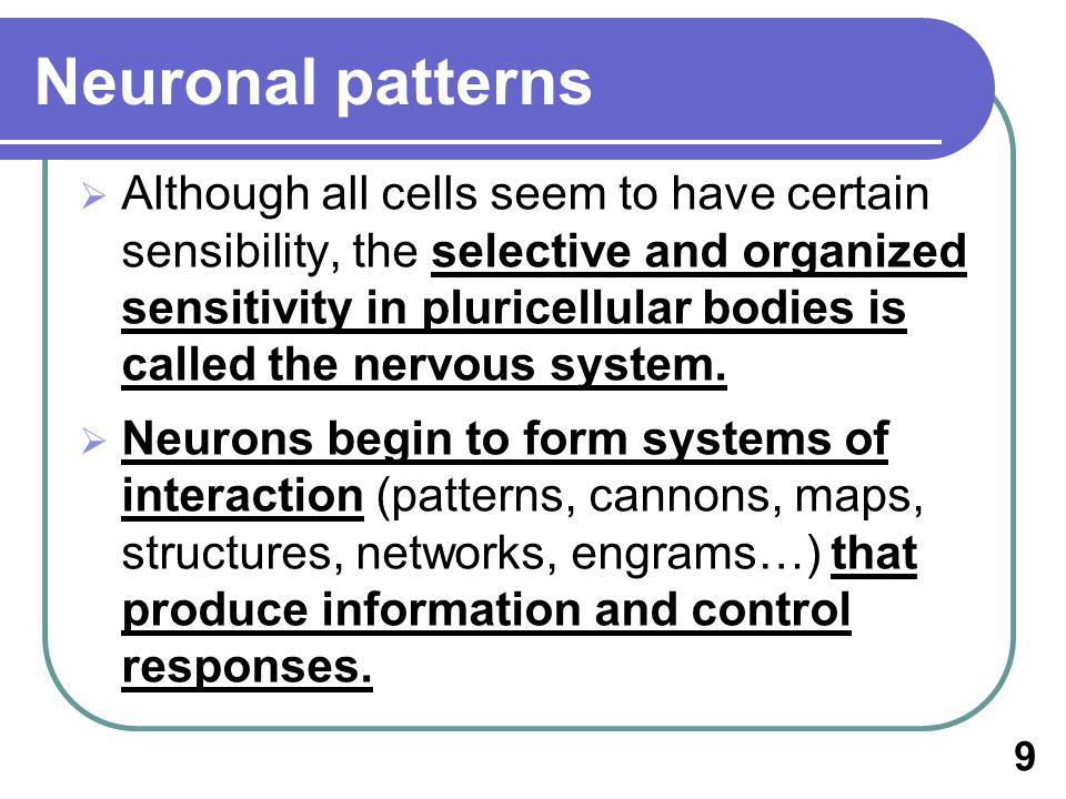 Although all cells seem to have certain sensibility, the selective and organized sensitivity in pluricellular bodies is called the nervous system.