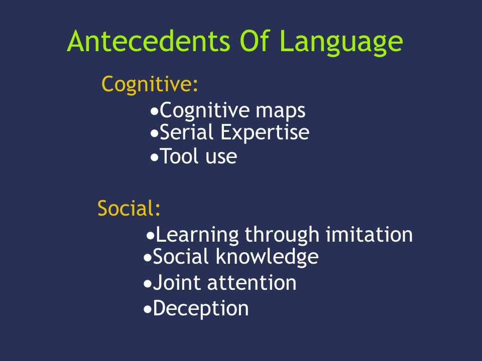 Antecedents Of Language Cognitive: Cognitive maps Serial Expertise Tool use Social: Learning through imitation Social knowledge Joint attention Decept