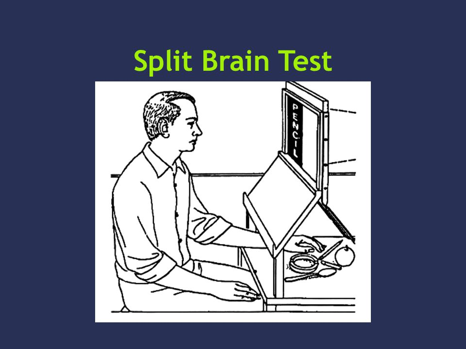 Split Brain Test