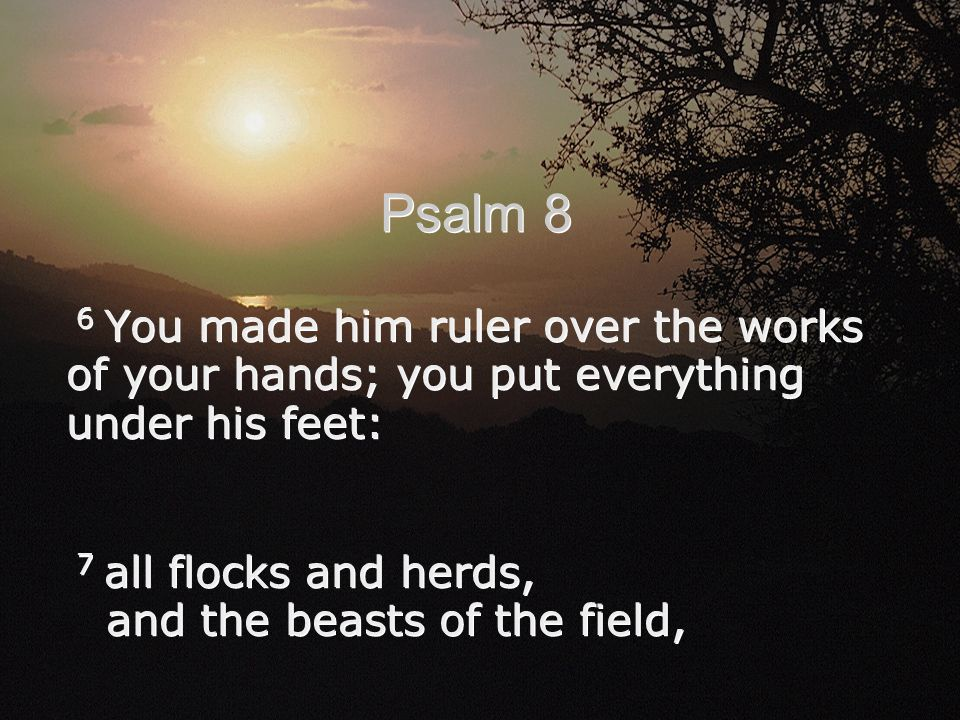 6 You made him ruler over the works of your hands; you put everything under his feet: 7 all flocks and herds, and the beasts of the field, 6 You made