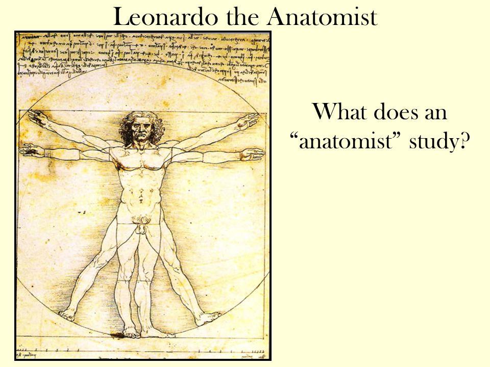 Leonardo the Anatomist What does an anatomist study?