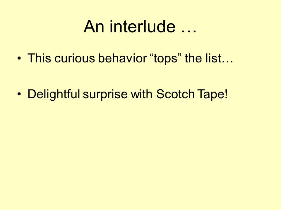An interlude … This curious behavior tops the list… Delightful surprise with Scotch Tape!