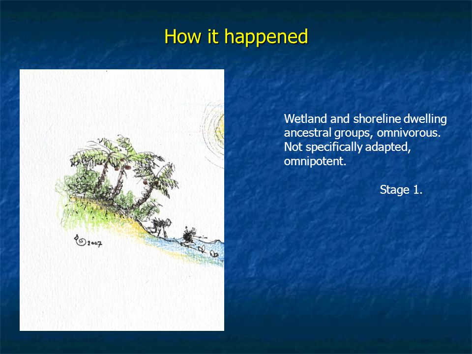 How it happened Wetland and shoreline dwelling ancestral groups, omnivorous.