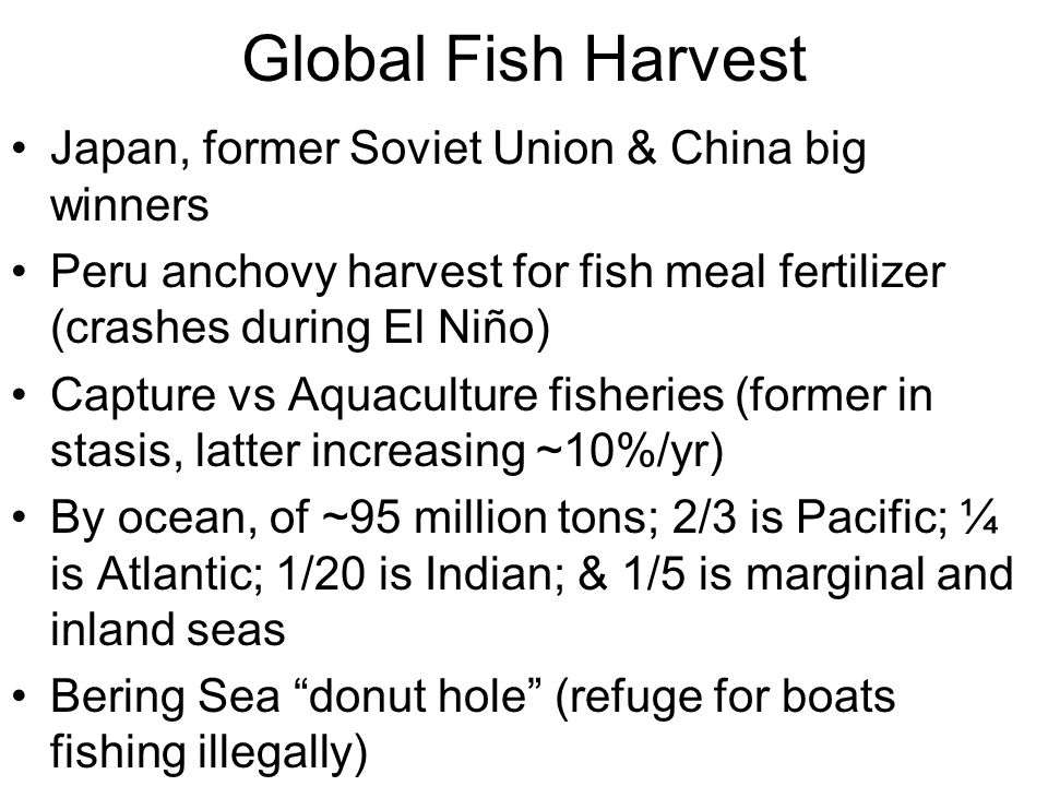 Global Fish Harvest Japan, former Soviet Union & China big winners Peru anchovy harvest for fish meal fertilizer (crashes during El Niño) Capture vs Aquaculture fisheries (former in stasis, latter increasing ~10%/yr) By ocean, of ~95 million tons; 2/3 is Pacific; ¼ is Atlantic; 1/20 is Indian; & 1/5 is marginal and inland seas Bering Sea donut hole (refuge for boats fishing illegally)
