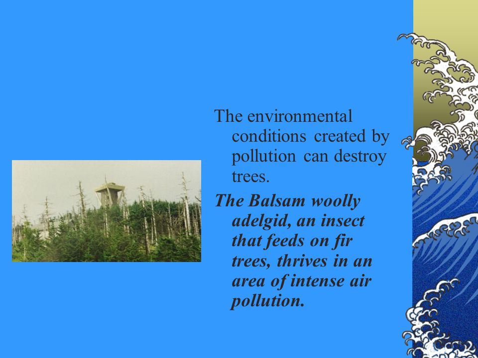 The environmental conditions created by pollution can destroy trees. The Balsam woolly adelgid, an insect that feeds on fir trees, thrives in an area
