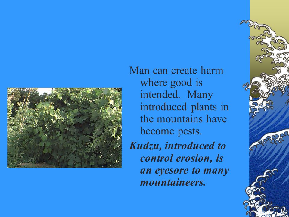 Man can create harm where good is intended. Many introduced plants in the mountains have become pests. Kudzu, introduced to control erosion, is an eye