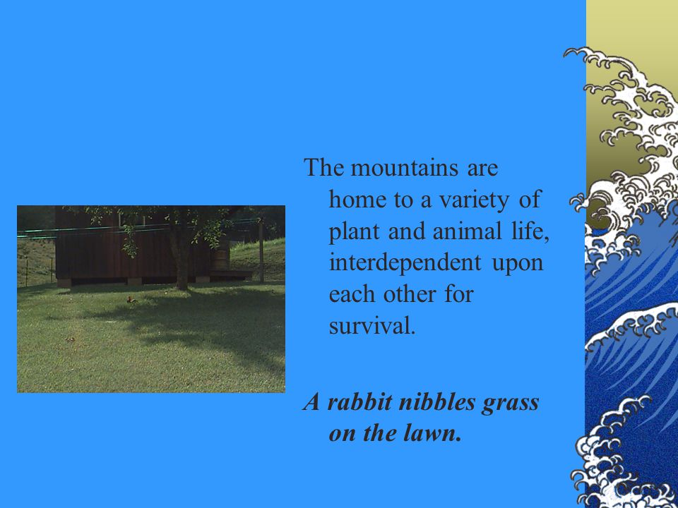 The mountains are home to a variety of plant and animal life, interdependent upon each other for survival. A rabbit nibbles grass on the lawn.