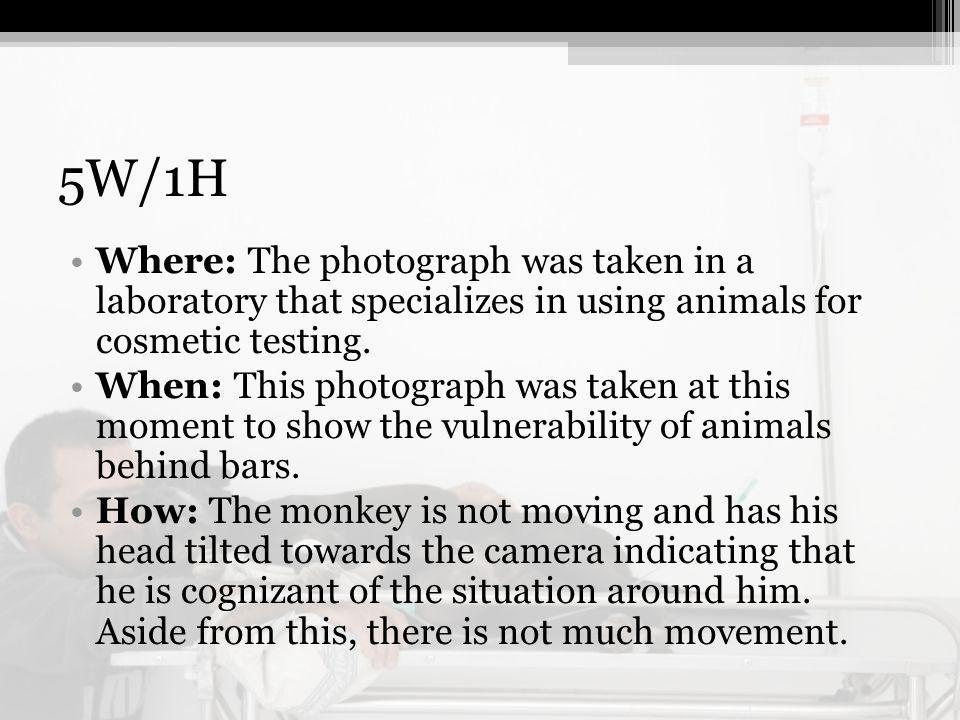 5W/1H Where: The photograph was taken in a laboratory that specializes in using animals for cosmetic testing.
