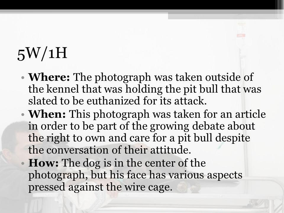 5W/1H Where: The photograph was taken outside of the kennel that was holding the pit bull that was slated to be euthanized for its attack.