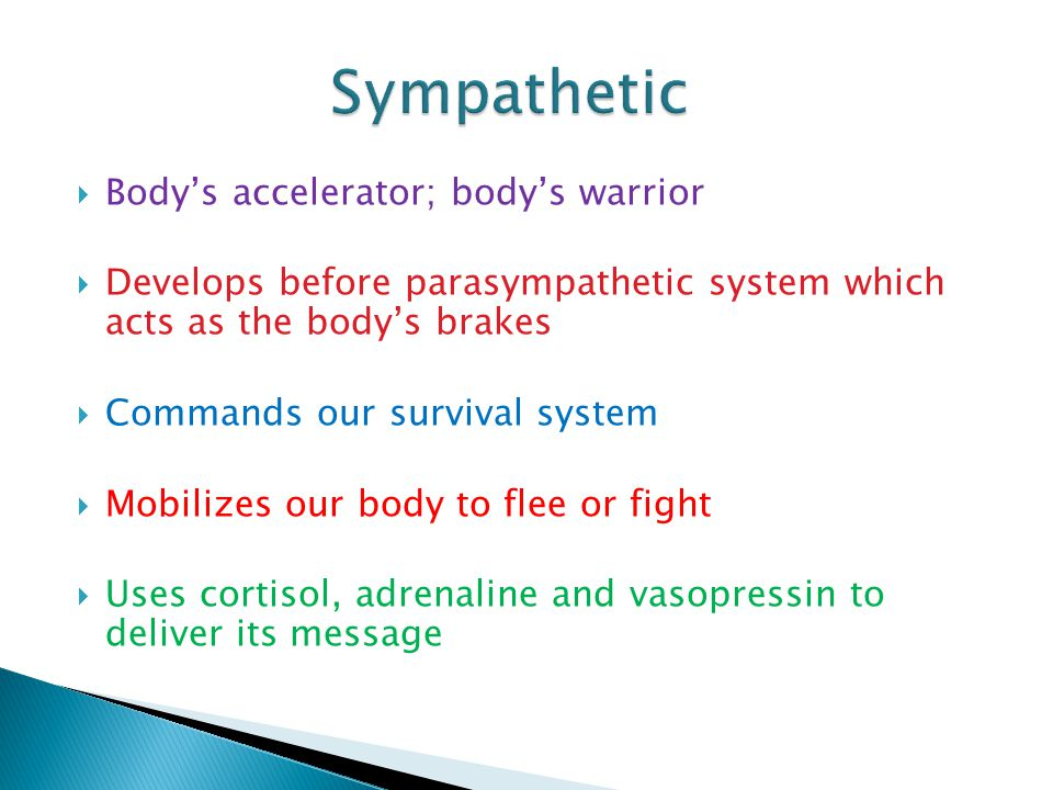 Bodys accelerator; bodys warrior Develops before parasympathetic system which acts as the bodys brakes Commands our survival system Mobilizes our body