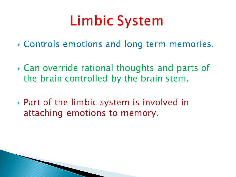 Controls emotions and long term memories. Can override rational thoughts and parts of the brain controlled by the brain stem. Part of the limbic syste