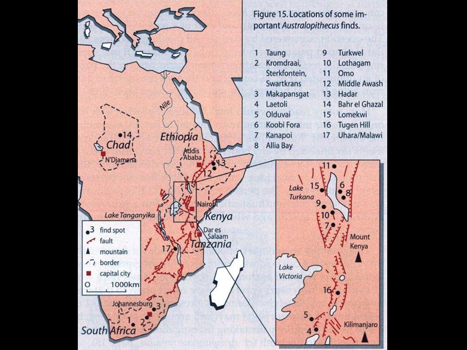 AustralopithecinesKenya map
