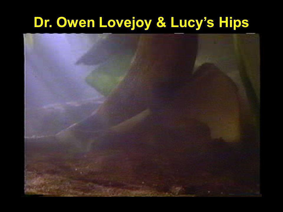 Dr. Owen Lovejoy & Lucys Hips Lovejoy grinding Lucys hips