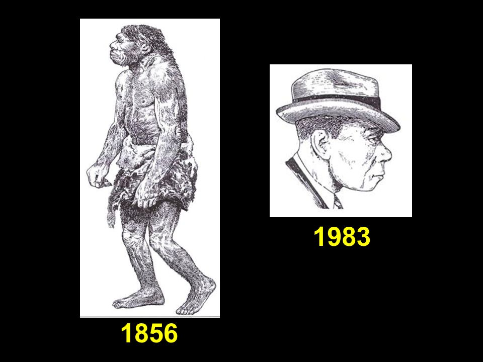 Neanderthalsthen (1856) and now (1983) 1856 1983