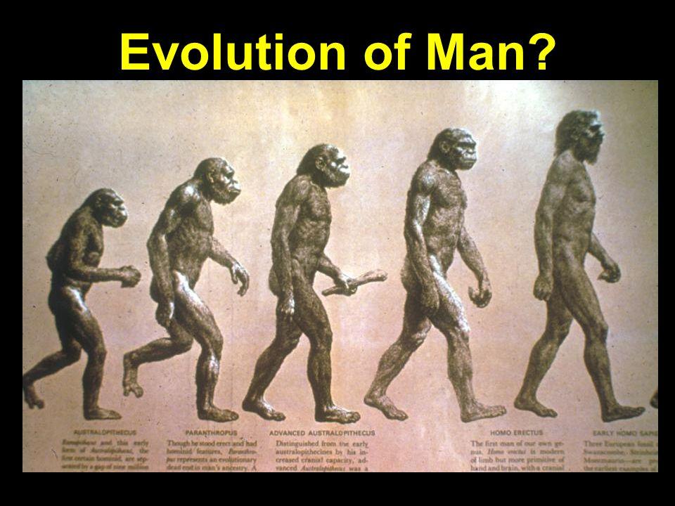 Evolution of man progression? Evolution of Man?
