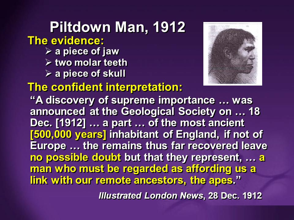 Purple blank Piltdown Man, 1912 The evidence: a piece of jaw two molar teeth a piece of skull a piece of jaw two molar teeth a piece of skull The conf