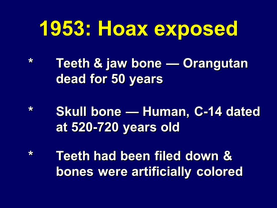 Piltdown Man #2 1953: Hoax exposed *Teeth & jaw bone Orangutan dead for 50 years *Skull bone Human, C-14 dated at 520-720 years old *Teeth had been filed down & bones were artificially colored