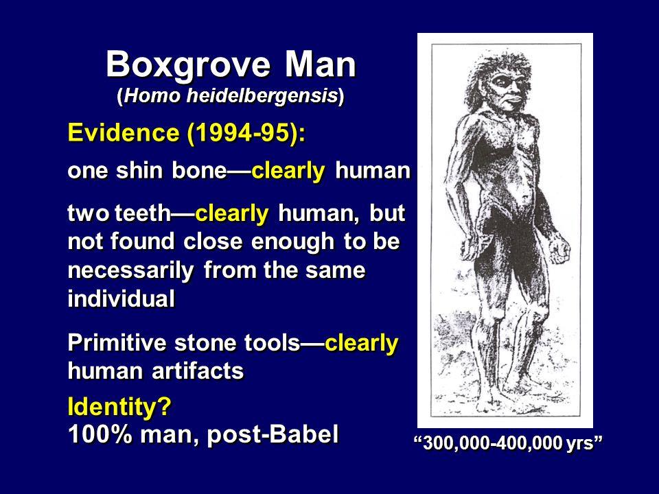 Boxgrove Man Evidence (1994-95): Identity.100% man, post-Babel Identity.