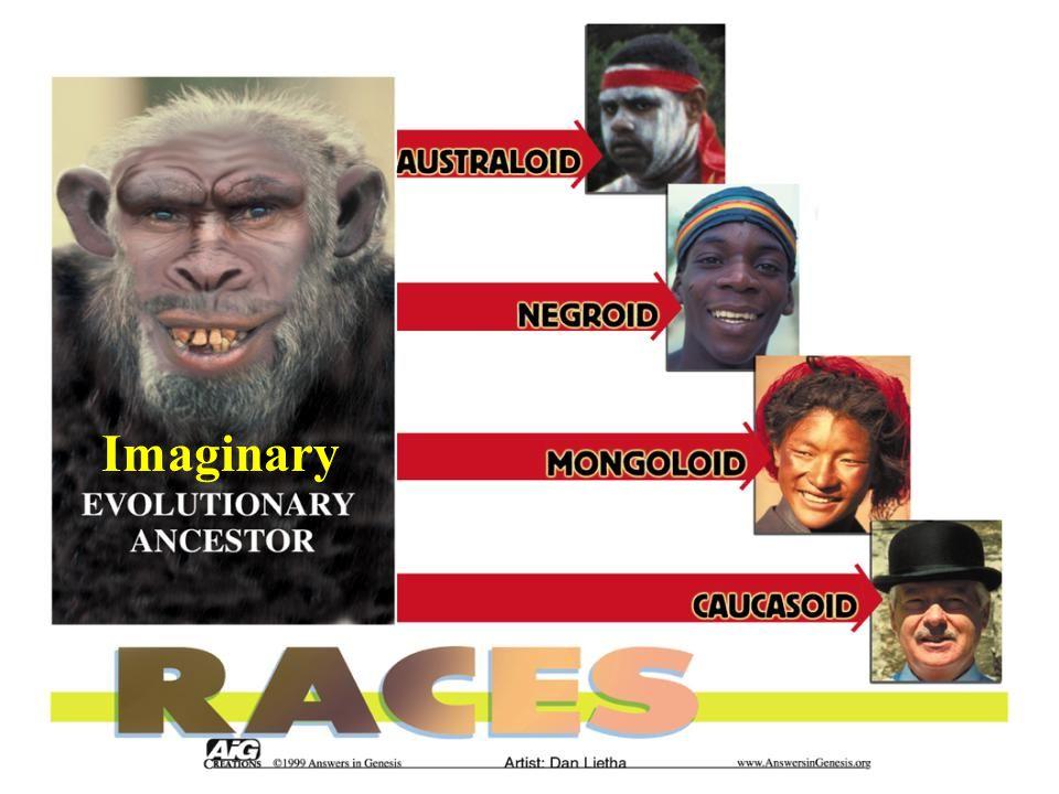 Races – Australoid to Caucasoid Imaginary