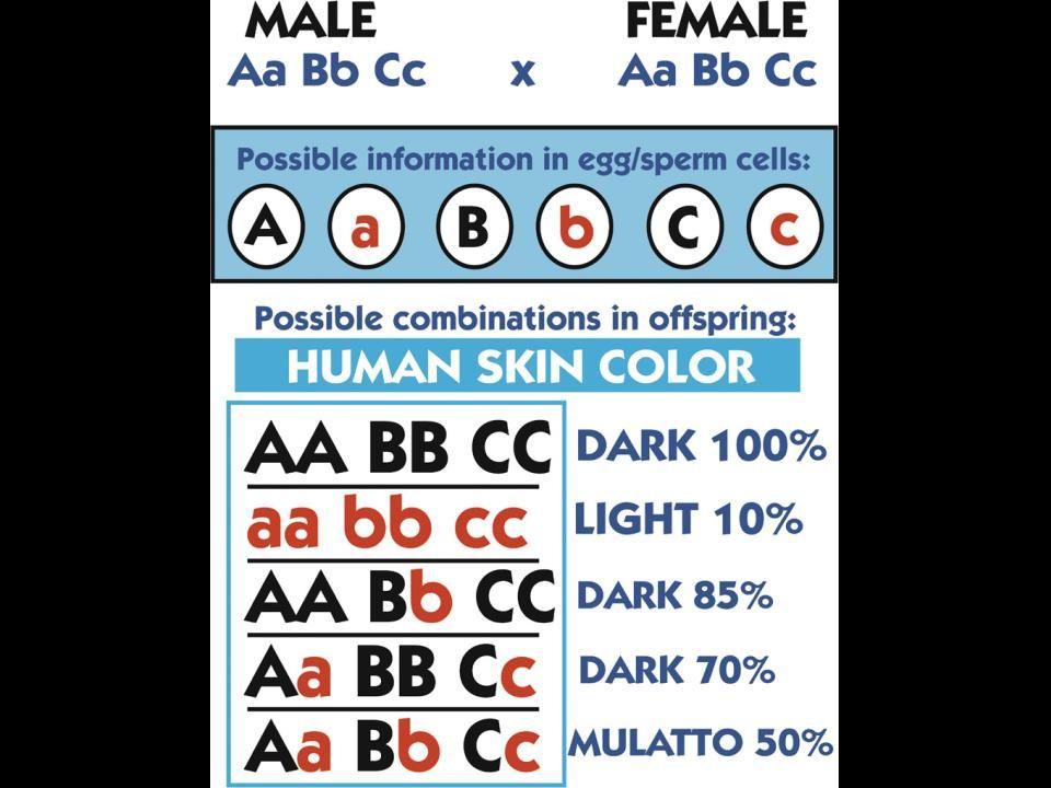 Variationhuman skin color