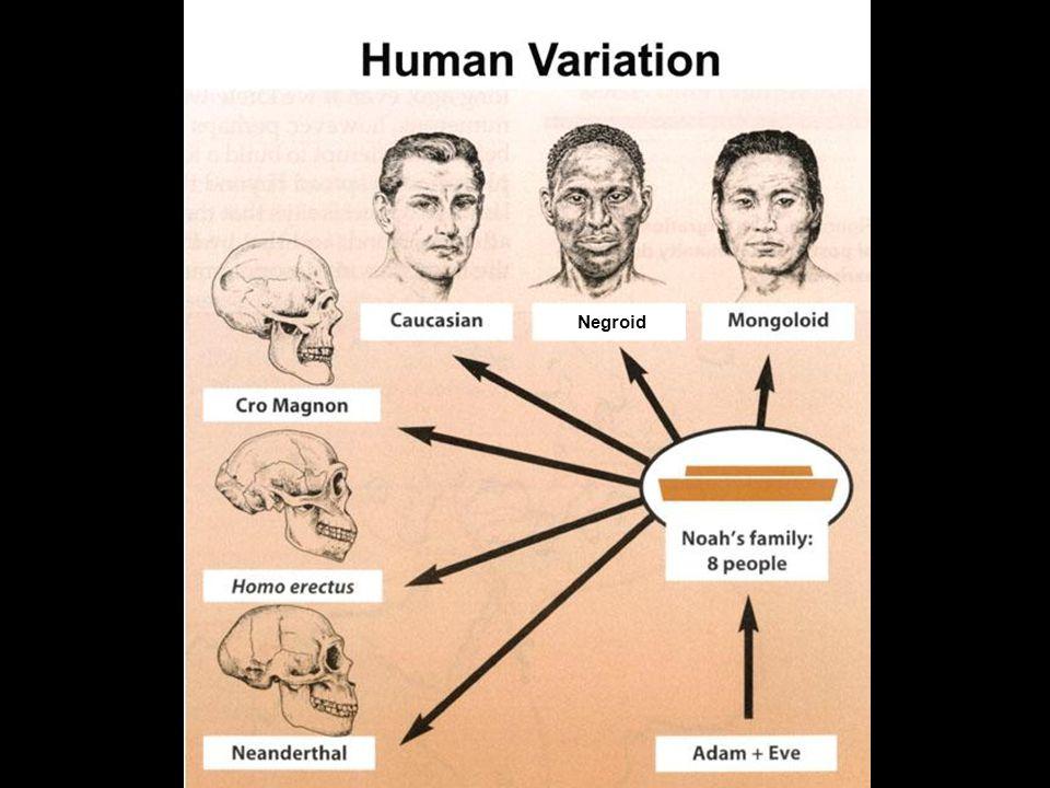 Human variation since Noah Negroid