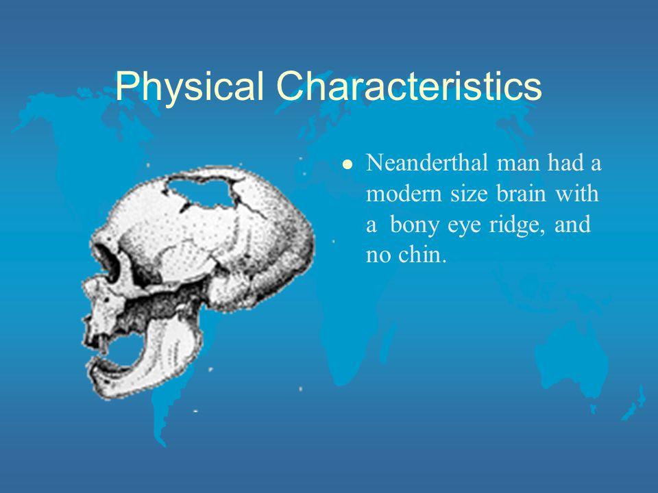 Physical Characteristics l Neanderthal man had a modern size brain with a bony eye ridge, and no chin.