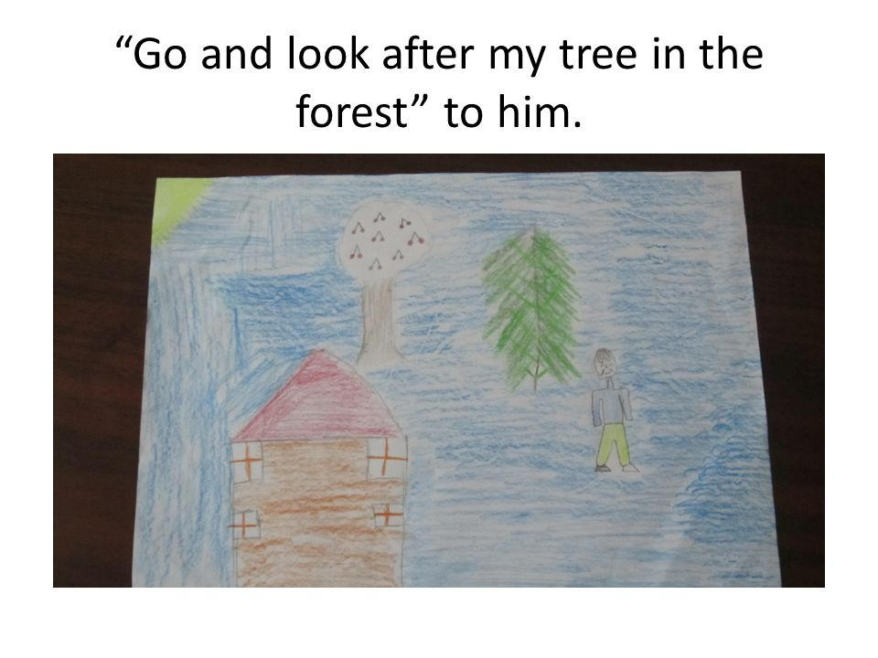 Go and look after my tree in the forest to him.