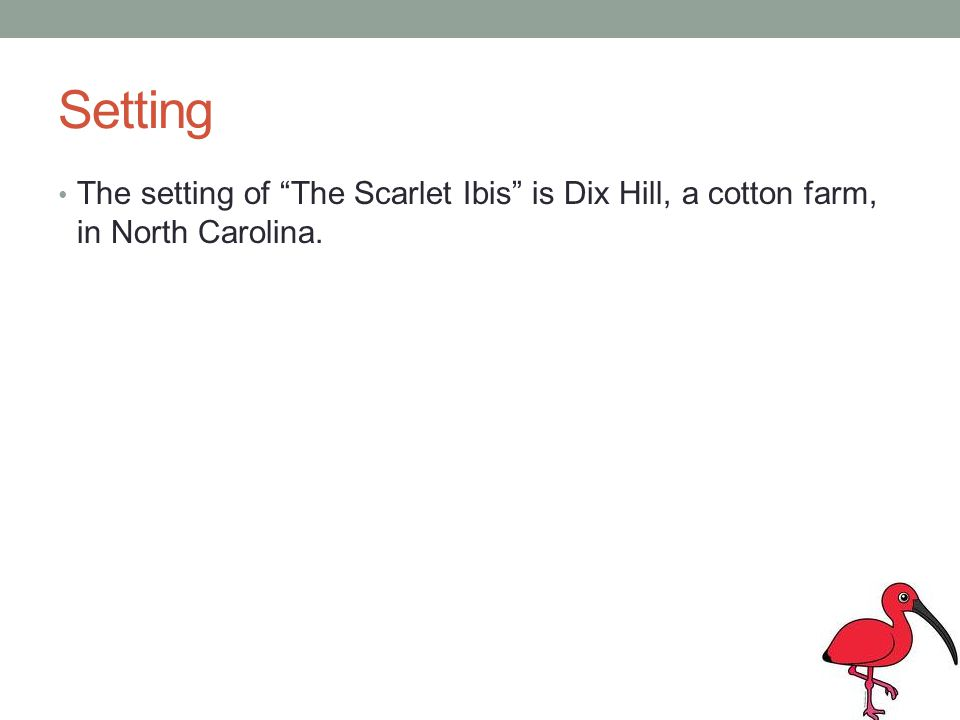 Setting The setting of The Scarlet Ibis is Dix Hill, a cotton farm, in North Carolina.