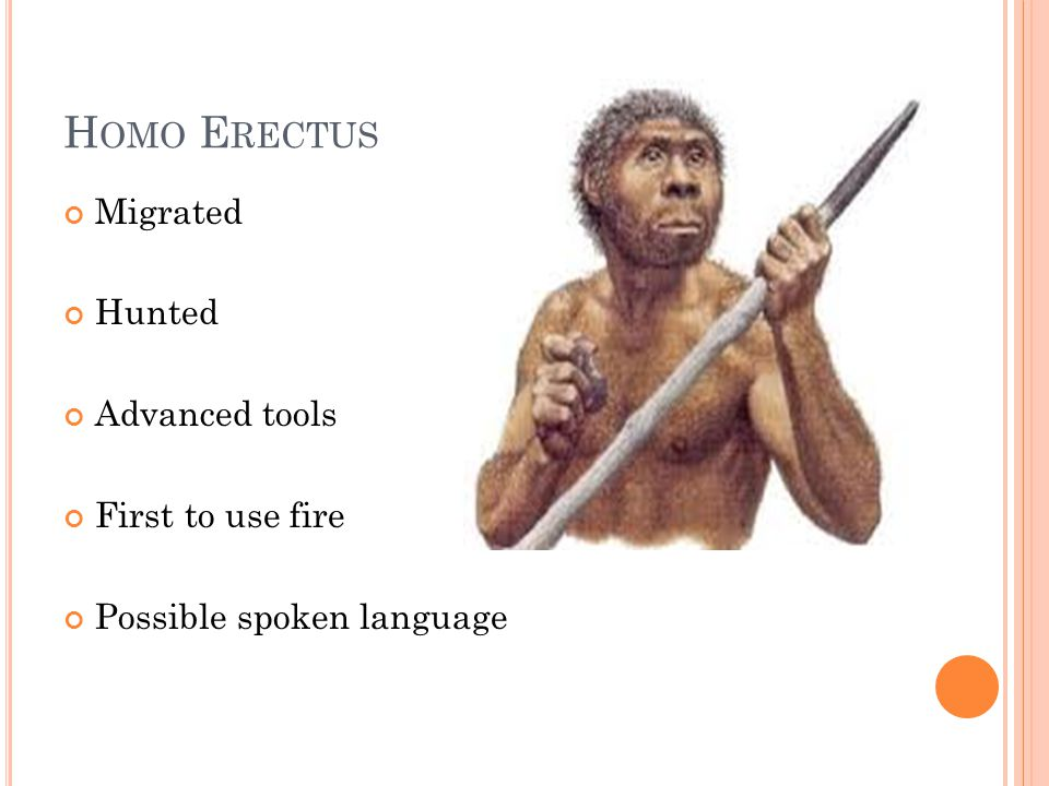 H OMO E RECTUS Migrated Hunted Advanced tools First to use fire Possible spoken language