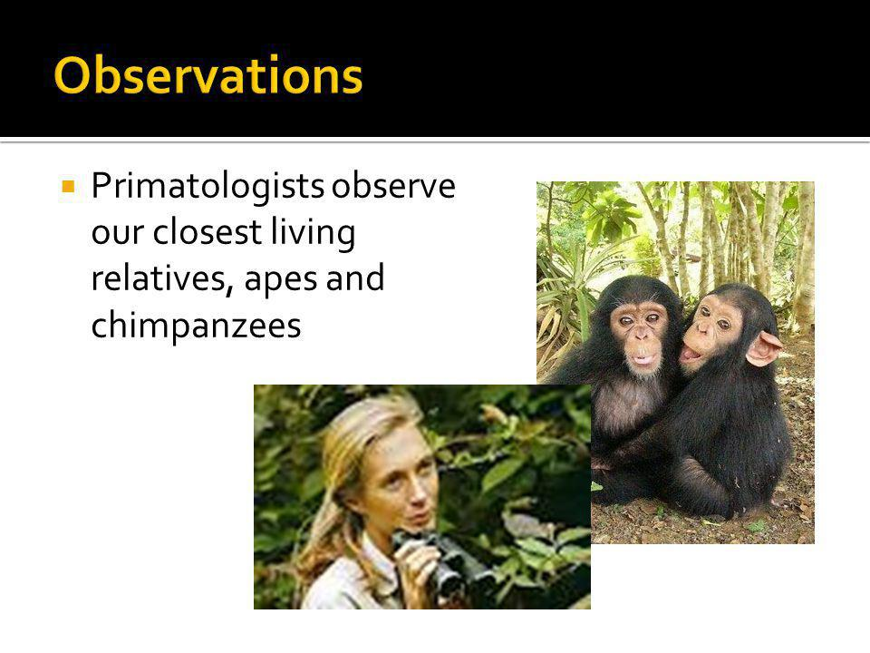 Primatologists observe our closest living relatives, apes and chimpanzees