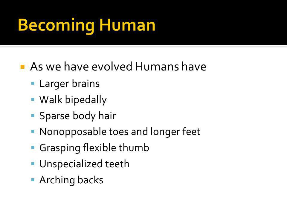 As we have evolved Humans have Larger brains Walk bipedally Sparse body hair Nonopposable toes and longer feet Grasping flexible thumb Unspecialized t