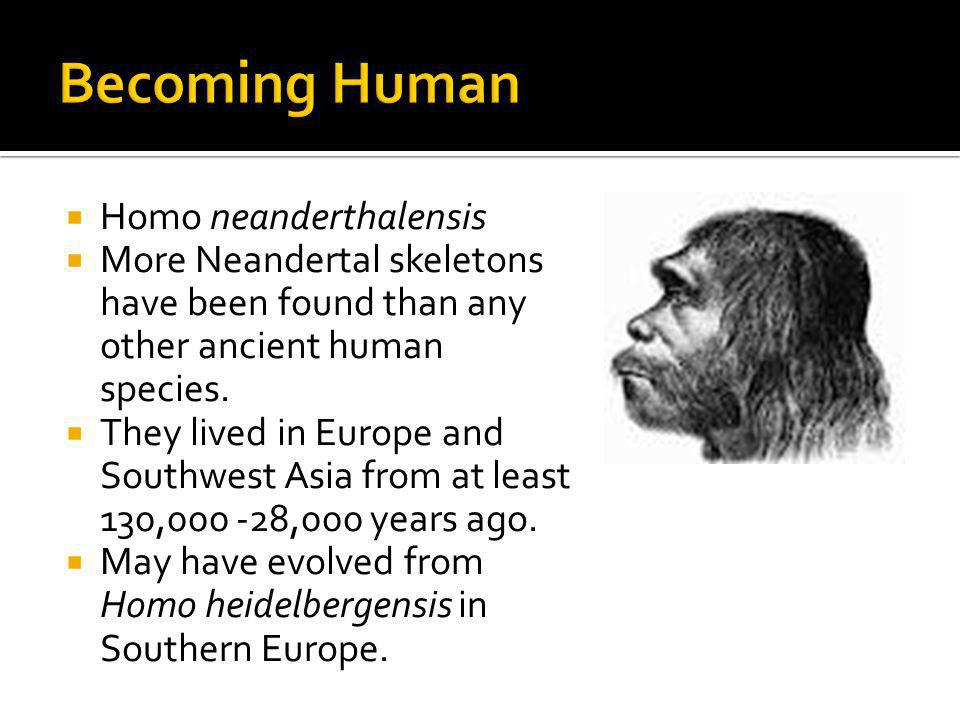 Homo neanderthalensis More Neandertal skeletons have been found than any other ancient human species. They lived in Europe and Southwest Asia from at