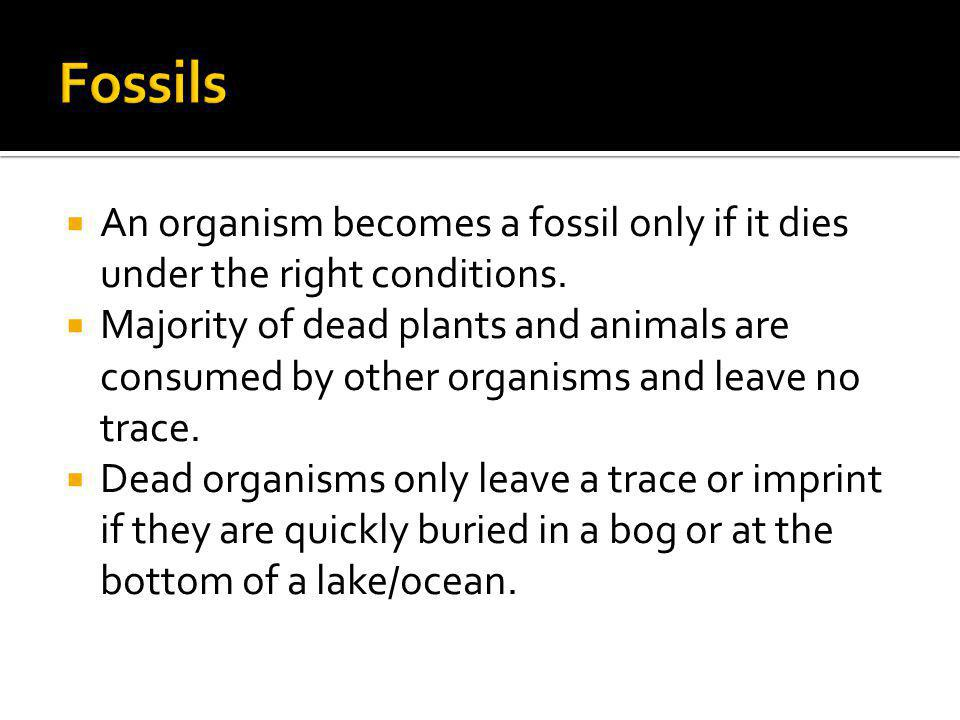 An organism becomes a fossil only if it dies under the right conditions. Majority of dead plants and animals are consumed by other organisms and leave