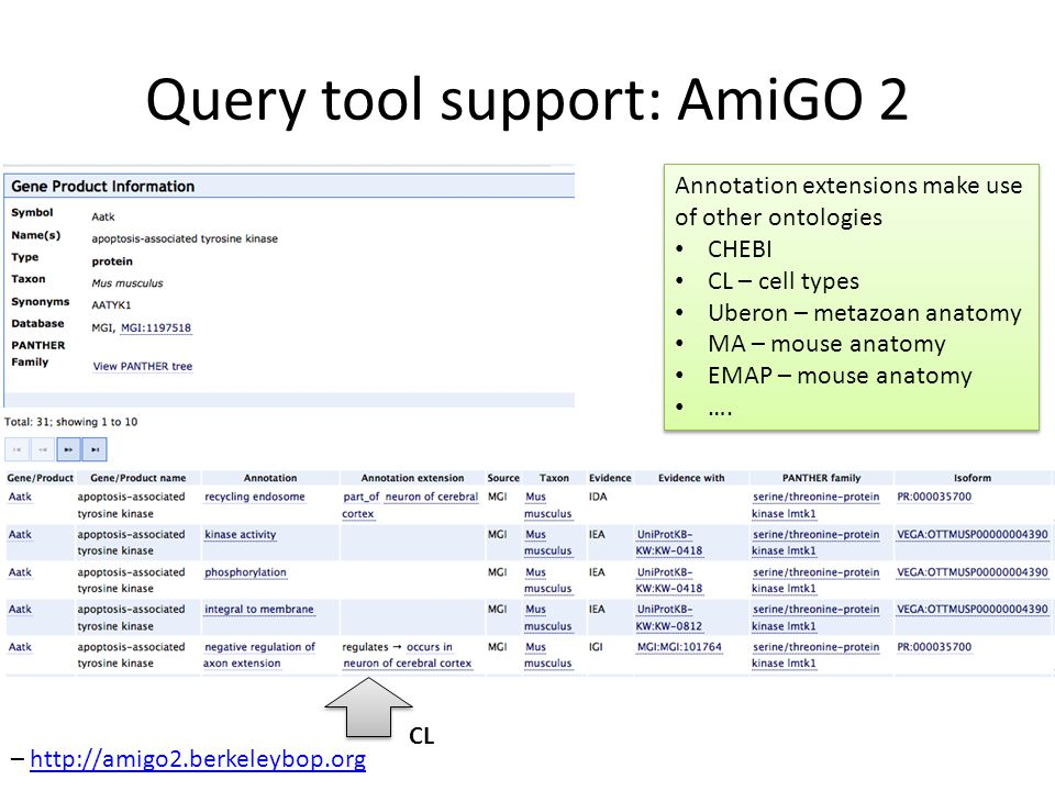 Query tool support: AmiGO 2 Annotation extensions make use of other ontologies CHEBI CL – cell types Uberon – metazoan anatomy MA – mouse anatomy EMAP