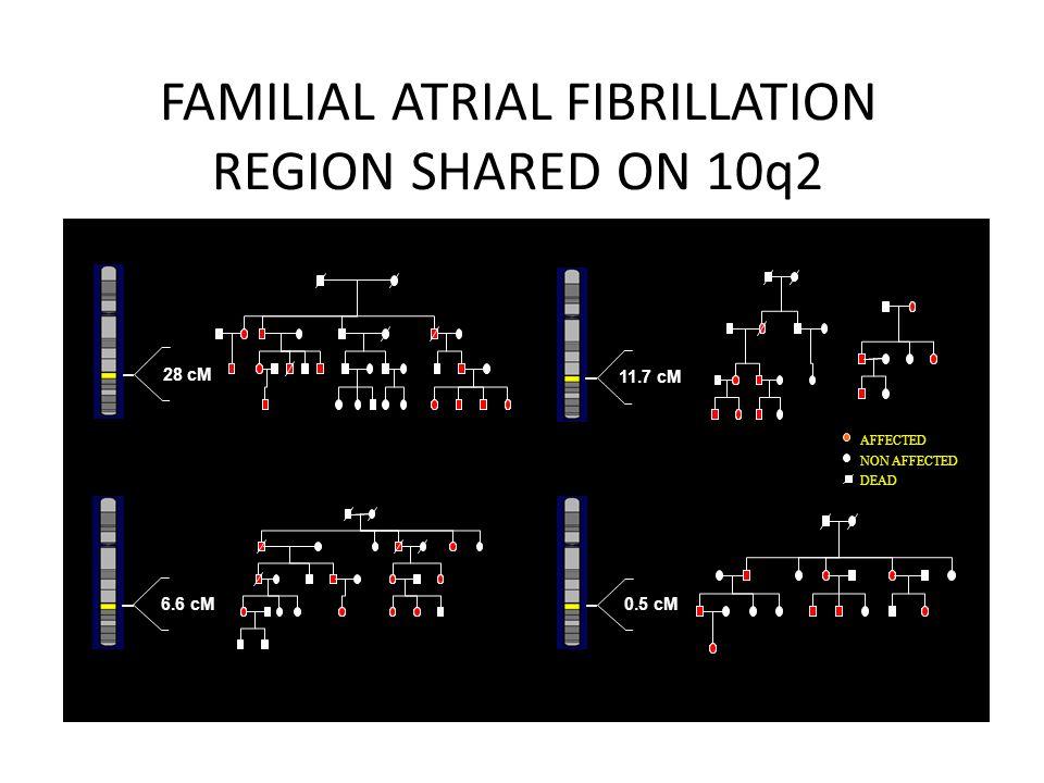 28 cM I:1I:2 11.7 cM 6.6 cM 0.5 cM FAMILIAL ATRIAL FIBRILLATION REGION SHARED ON 10q2 AFFECTED NON AFFECTED DEAD Familial Atrial Fibrillation
