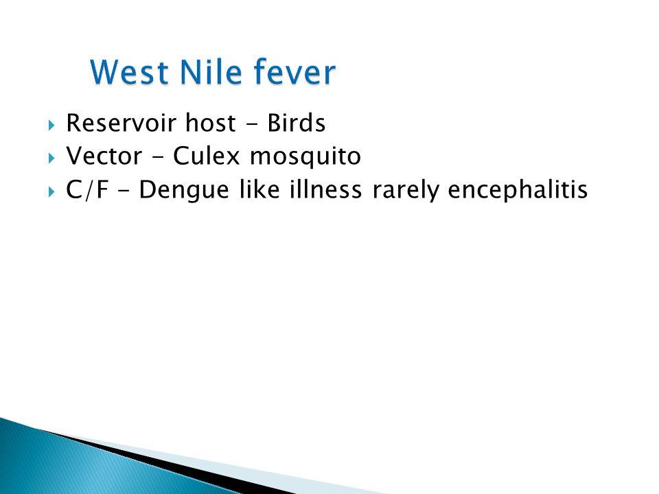 Reservoir host - Birds Vector - Culex mosquito C/F - Dengue like illness rarely encephalitis